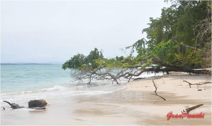 Excursión por el archipiélago de Bocas del Toro en Isla Zapatilla. En Blog de Viajes, Bocas del Toro con niños