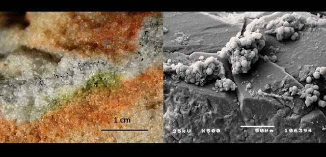 Section of rock colonised by cryptoendolithic microorganisms and the Cryomyces fungi in quartz crystals under an electron microscope. / S. Onofri et al.