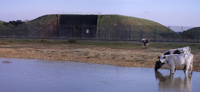 Image of cows drinking in front of missile silos