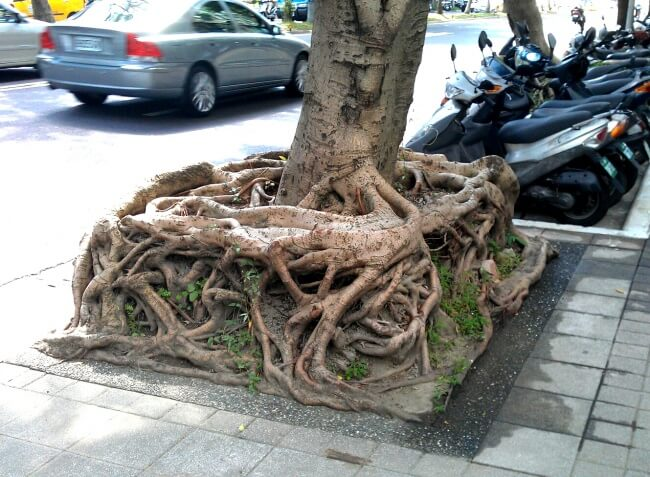 25 Breathtaking Pictures That Made Us Gasp - Compact roots