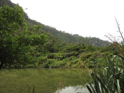 Pororari River Track, Parque Nacional Paparoa