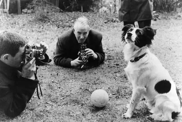 Um cachorro foi herói do futebol mundial (Imagem: Reprodução/Internet)