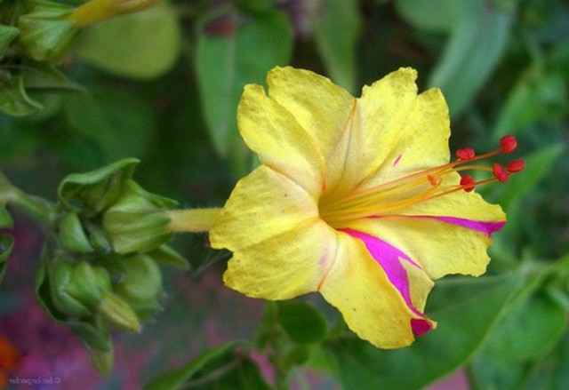 Pictures Of Beautiful Hibiscus Flowers