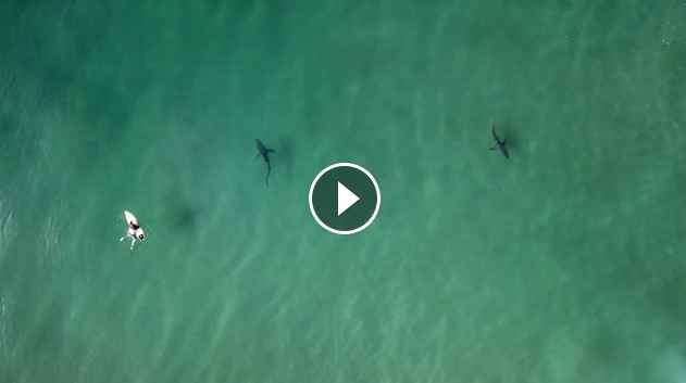 3-minutes of Sharks Circling Surfers in Durban South Africa SURFER Magazine