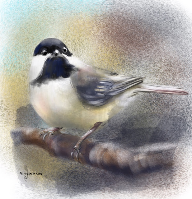 Black capped Chickadee bird painting by Artmagenta