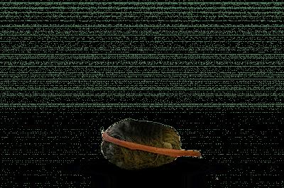 Bomb png 2020