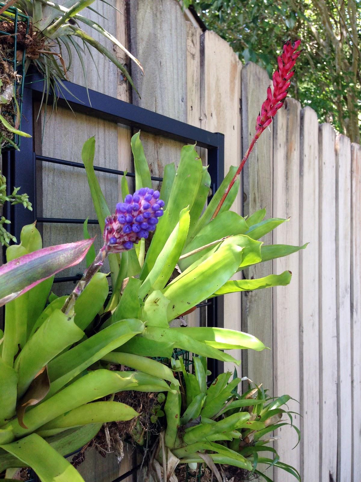 garden benefits a vertical of the