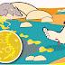 Atenção: Período de chuvas aumenta riscos de leptospirose
