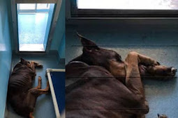 He is in horrific shape, heartbroken and depressed Duke cowers all day long in his kennel