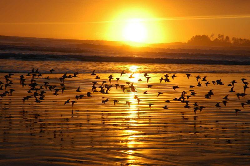 اجمل صور للغروب sunset_B.jpg