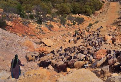 Mujer nómada pastoreando el rebaño