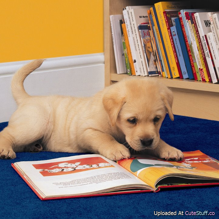 About Us | The Barkshire: Resort for Paws - Michigan's ... |Puppy Reading