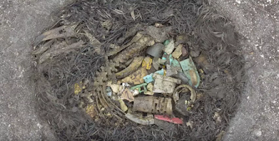 ¿Porque las aves marinas ingieren plásticos?