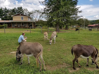 Five donkeys in the pasture
