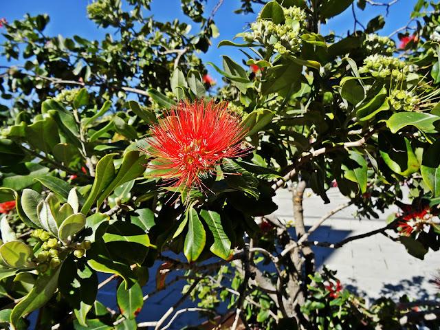 kwitnące kwiaty na wyspie Majorka