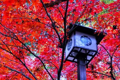 Hitoyoshi maple leaves and lantern, Kyushu