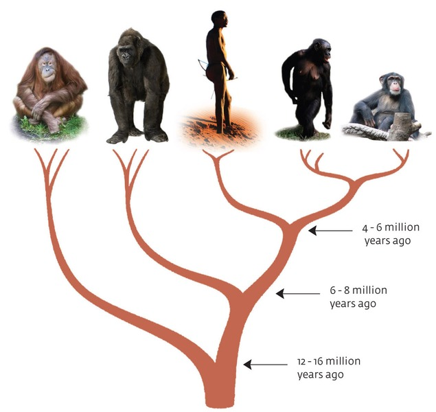 Speciation from a Common Ancestor