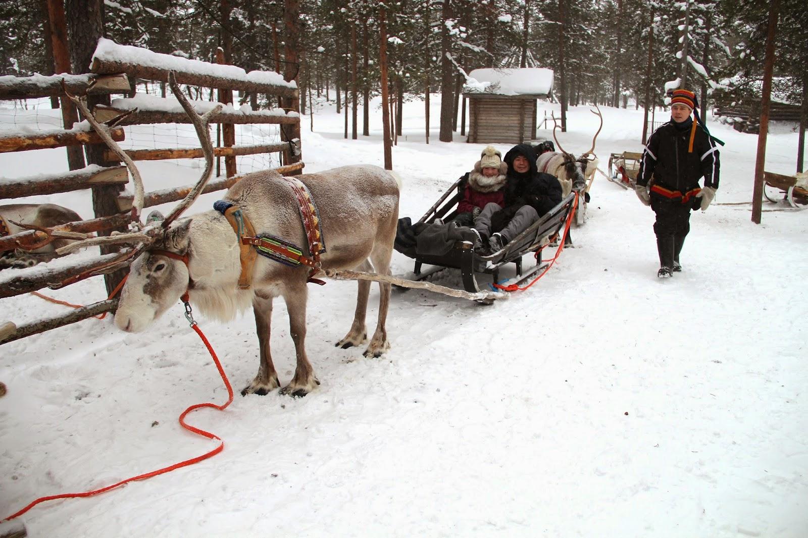 Reindeer Sleigh Ride Finland