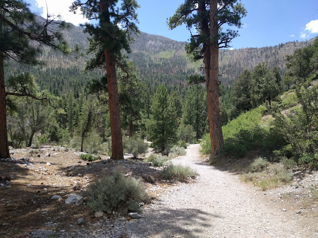 Fletcher Canyon Trail at Mt Charleston