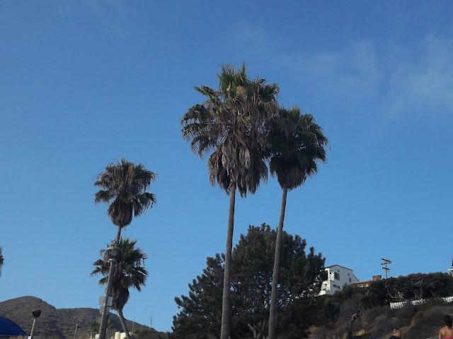 USA-laguna-beach-plage-palmiers