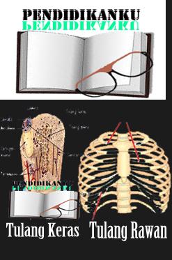Perbedaan Tulang Keras Dan Tulang Rawan
