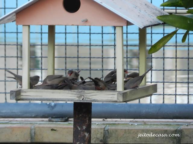 comida-para-atrair-passarinhos-ao-seu-jardim-ou-quintal