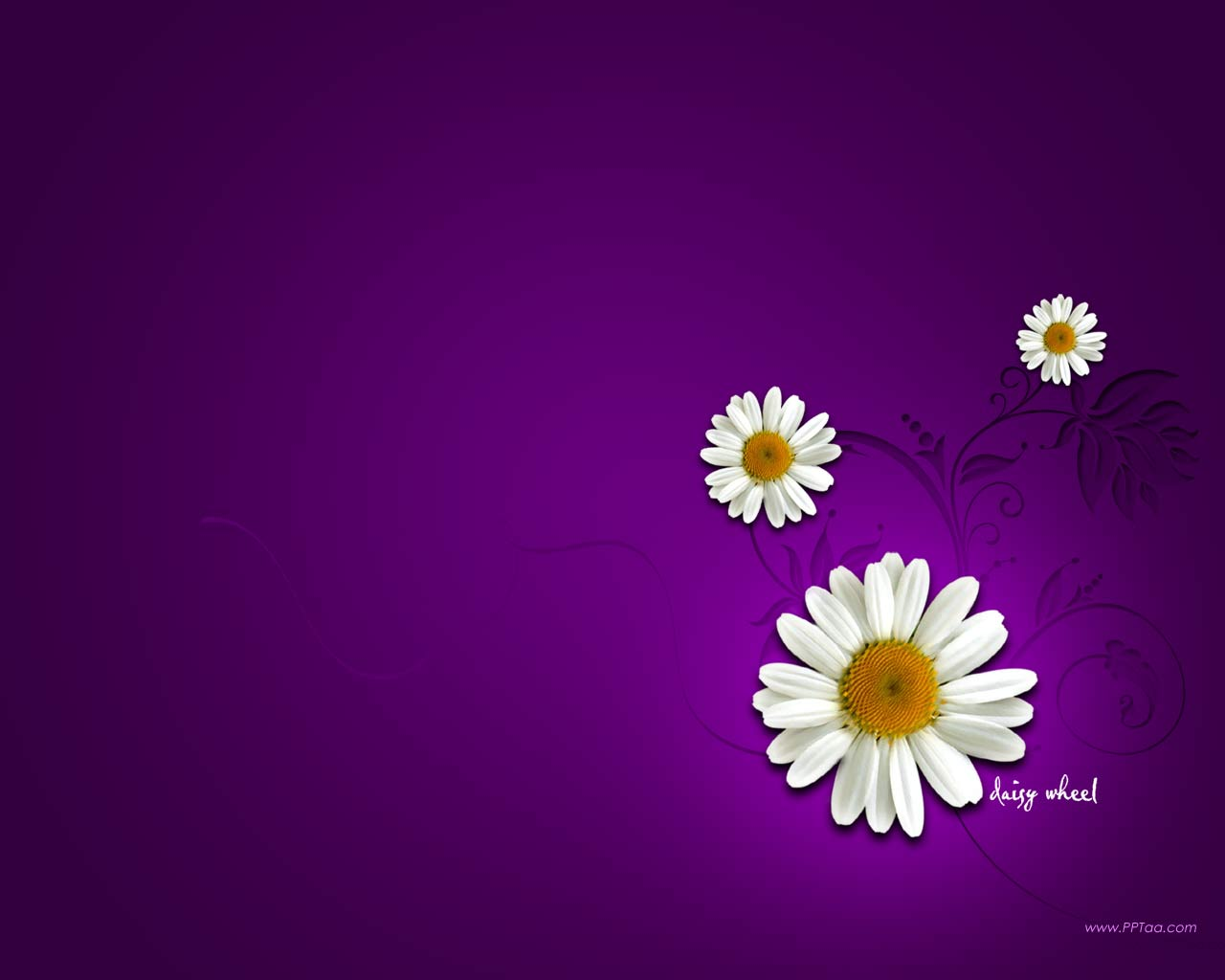 Daisy Flower Wallpaper Flower Dreams