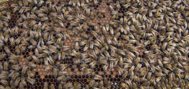 Ecuador se familiariza con las bondades de las abejas 11