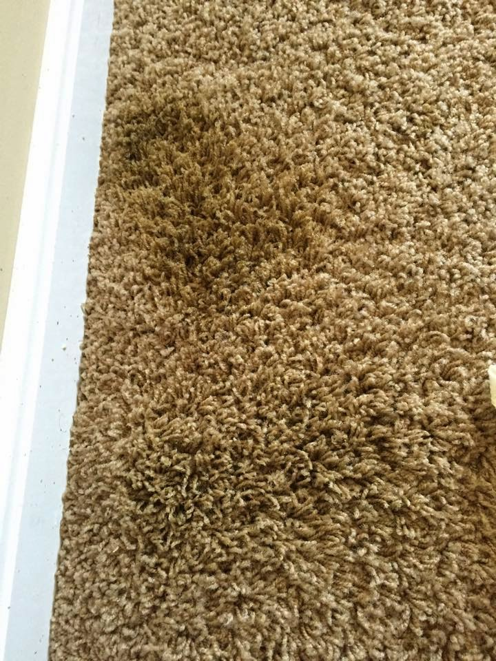 Best Carpet Cleaner And Stain Remover: Remove Old Pet ...