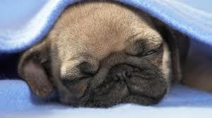 Sesekali Tidur siang