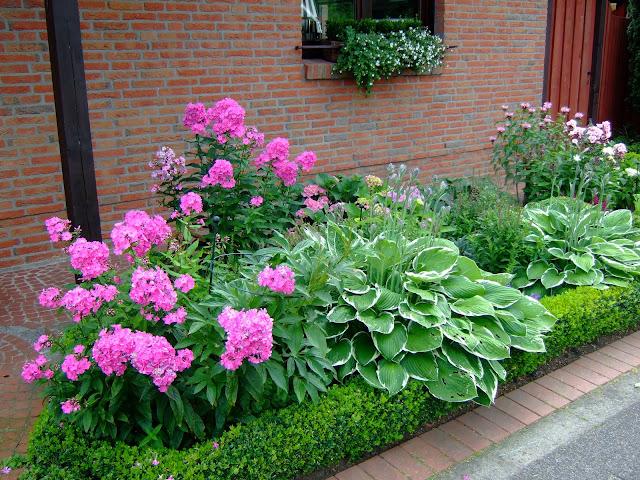 was passt zu hortensien hortensien das passt dazu mein sch ner garten welche pflanzen passen. Black Bedroom Furniture Sets. Home Design Ideas
