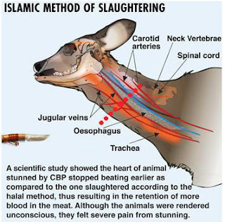 What is the correct method of slaughtering an animal? How to slaughter an animal?
