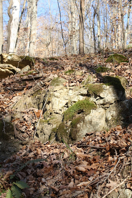 Rocks in Hoosier National Forest