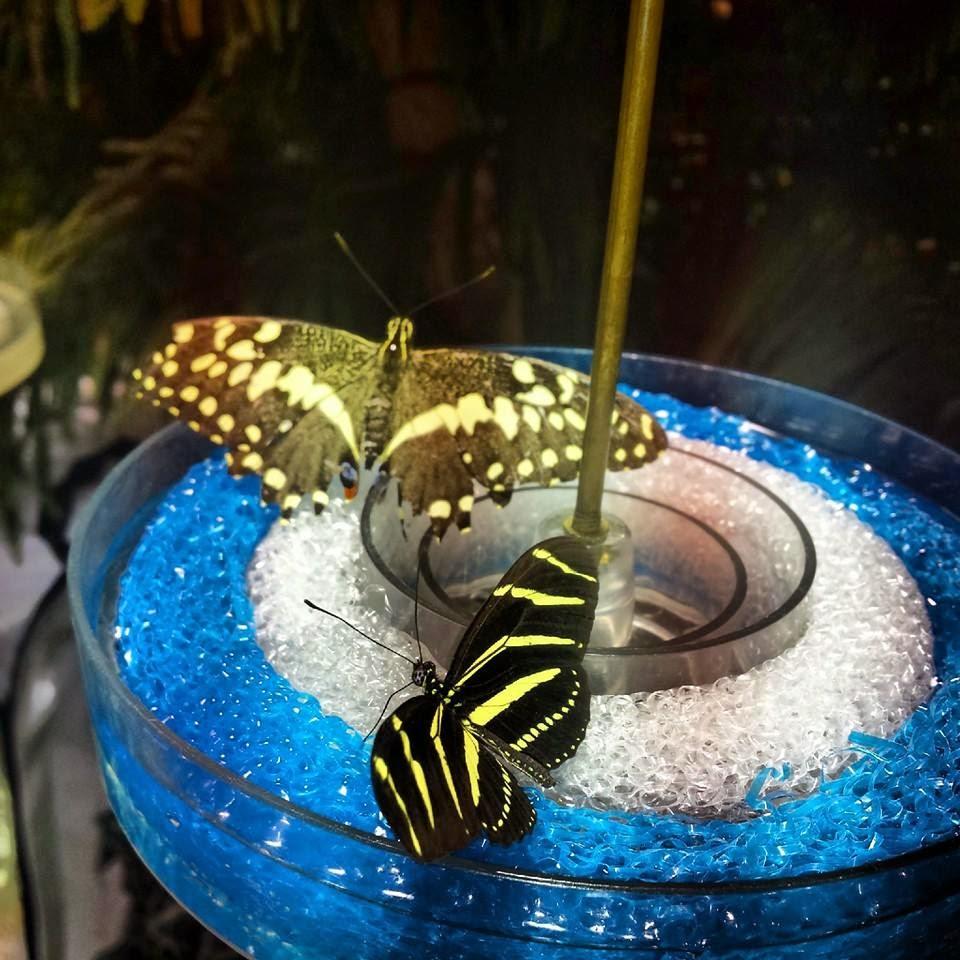 mariposas del museo de historia natural de nueva york