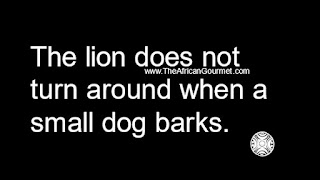The lion does not turn around when a small dog barks.