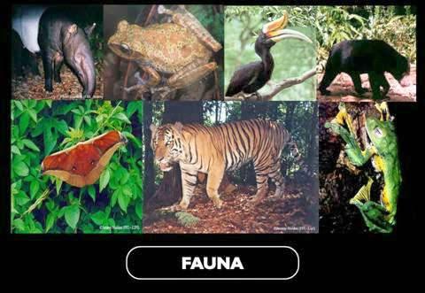 Fauna Taman Nasional Kerinci Seblat