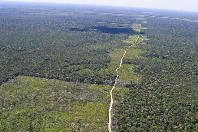 Brasil é reconhecido pela redução do desmatamento e ganhará quantia em dinheiro