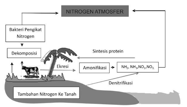 Skema Siklus Nitrogen di Alam