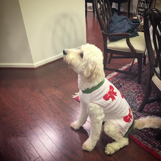 goldendoodle christmas sweater