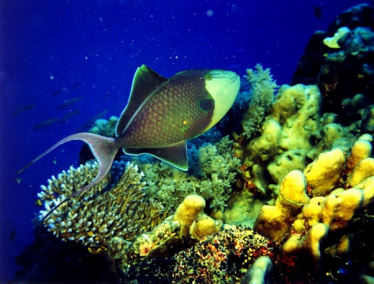 Great Barrier Reef One Of The Seven Natural Wonders Of