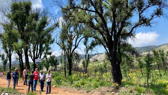 Medio Ambiente presenta las ayudas de más de 930.000 euros para la recuperación agroforestal en la segunda Mesa de Concertación de Llutxent