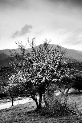 Niedziela - zwycięstwo życia nad śmiercią. Fotografia odklejona alegoryczna. fot. Łukasz Cyrus