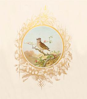 Birds Catalogue