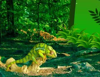 Juegos de Escape - Wild Chameleon Forest Escape