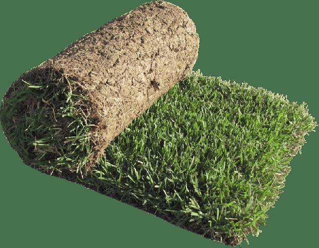 sod grass, grass rolls