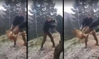 Ο σκύλος που πετάχτηκε σε γκρεμό από τους φαντάρους επέζησε και είναι καλά