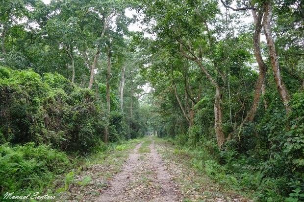 Camminata nel Parco Nazionale del Chitwan