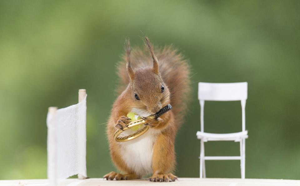 Squirrels warm-up for Wimbledon championships