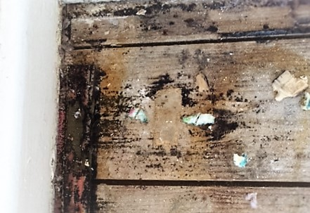 mould on floorboards