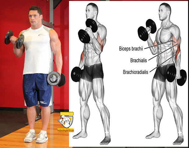 Alternate Biceps Curl for men at home